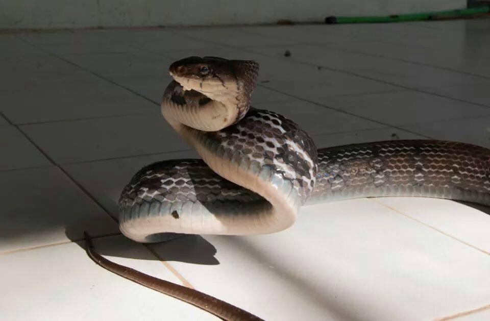 Шоу крокодилов и змей на Ко Чанге